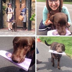 "@dottie_lottie_  shares with us: ""This is Brian ""the ministry dog"" from Surrey, England. He was the dog of a do-not-call but grabbed the leaflet from us and took it to his owner! Then he carried on and helped us with the rest of the street. It's amazing the ways Jehovah reaches people we cannot!"""