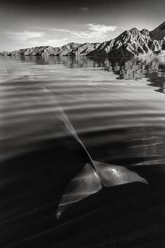 Interview: Photographer Christopher Swann Captures Whales and Dolphins in All Their Glory - My Modern Met