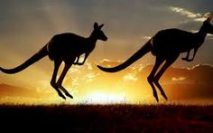 Find Australian Outback Kangaroo Series stock images in HD and millions of other royalty-free stock photos, illustrations and vectors in the Shutterstock collection. Thousands of new, high-quality pictures added every day. Sydney Australia Travel, Australia Tours, Moving To Australia, Iconic Australia, Queensland Australia, Australia Kangaroo, Destinations, Australian Animals, Australian Icons