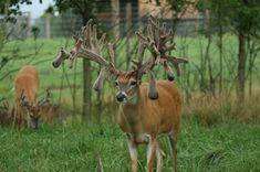 Meer dan 1000 idee 235 n over ohio deer hunting op pinterest geweien