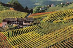 frenchwinecountry - Google Search