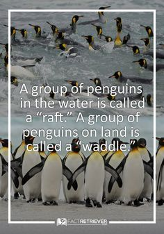 70 Interesting Facts about Penguins | FactRetriever.com