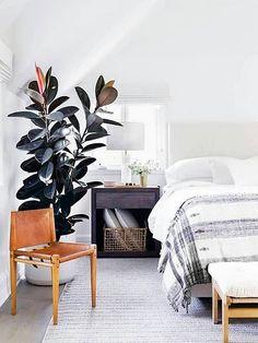 kleines leaves and butterflies wohnzimmer abzukühlen bild und cfeacfadfbaf big plants potted plants