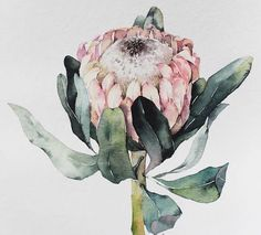About Graphic Design Protea Art, Protea Flower, Flower Bird, Watercolor Design, Watercolour Painting, Watercolor Flowers, Australian Flowers, Watercolor Paintings For Beginners, Bloom Blossom