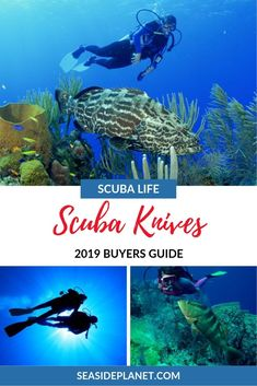 Searching for a high-quality scuba knife for your underwater excursions and explorations? Take a look at some of the best scuba knives of Scuba Diving Courses, Scuba Diving Equipment, Scuba Diving Gear, Scuba Diving Certification, Swimming Sport, Water Sports, Snorkeling, Underwater, Good Things