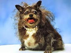 Voilà le chien de la Favorite. Son nom est Pyrrhos. Personne n'aime le chien parce que il est méchant et laid.