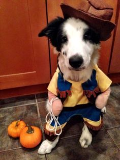 Pet Halloween Costumes So Cute You'll Cry.