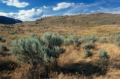 """Driving deep into the Okanagan Valley in central British Columbia, there's a puzzling message at the side of the road: """"No National Park. Osoyoos Bc, Cold Deserts, Area Map, Canadian History, Canada Travel, British Columbia, National Parks, Places To Visit, Guide Book"""