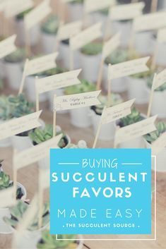 Succulent favors are perfect for weddings, events, bridal showers and baby showers! We sell all types and sizes to meet your needs! Wedding Shower Favors, Beach Wedding Favors, Bridal Shower Gifts, Wedding Wishes, Baby Shower Favors, Baby Shower Themes, Shower Ideas, Wedding Ideas, Wedding Souvenir
