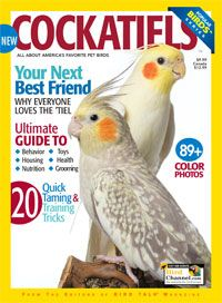 Find out what your cockatiel is saying and learn how to teach your pet bird how to whistle and talk.