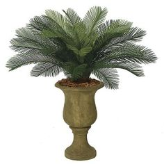 Evoke Memories of Vacations Past with Regional Artificial Plants Sago Palm Tree, Palm Trees, Floor Plants, House Plants, Colonial, Artificial Plants And Trees, Decorative Planters, Tropical Paradise, Topiary