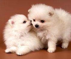 perritos bonitos dandose besito <3