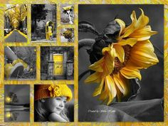 lovely grey and yellow