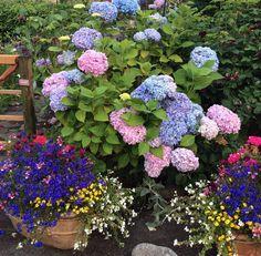 Flowers, I love you all, Doons garden