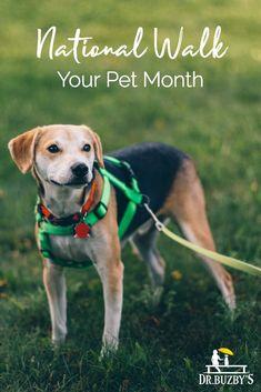 63 Best Senior Dog Essentials Images In 2019 Essentials Best Dogs