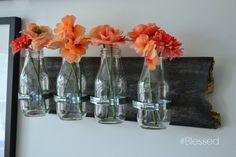 milk jar wall vases