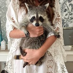 Pumpkin the adorable Rescue Raccoon Baby Raccoon, Racoon, Rocket Raccoon, Animals And Pets, Baby Animals, Cute Animals, Nassau, Les Bahamas, Dog Pumpkin