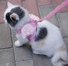 Cat harness for safety walking with matching angel wings with lace pearls.
