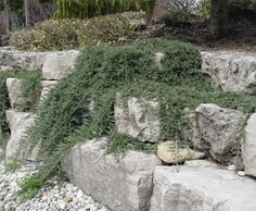 12 Best Retaining Wall Cover Ideas Images Landscaping