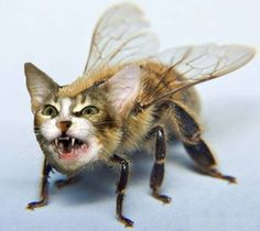 What? You've never seen a cat bee before?  The comments on this...lol
