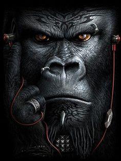 Gorilla. ❣Julianne McPeters❣ Gorilla Wallpaper, Lion Wallpaper, Animal Wallpaper, Monkey Wallpaper, Nature Wallpaper, Gorilla Tattoo, Lion Tattoo, Image Portable, Download Wallpaper Hd