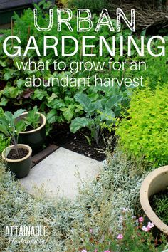 Looking for some small vegetable garden ideas? Make the most of the space you have with these vegetables that produce abundantly even in an urban garden. Sometimes you have to get creative with the space you've got. Choose these crops and consider some unexpected vegetable garden ideas to generate an urban harvest. #garden #vegetablegarden #urbangarden via @Attainable Sustainable
