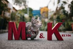 Calling All Cat Lovers – May and Kelvin's Cat Alley Engagement Shoot by Hilary Cam Photography