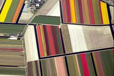 aerial photos of tulip fields in holland