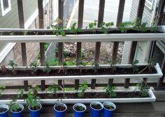 Gutter Gardening 101 (HOMEGROWN.org)