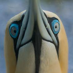 all Eyes by Bridgena Barnard - Animals Birds ( barnard, images, bridgena )