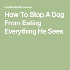 How To Stop A Dog From Eating Everything He Sees