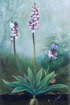 Vegan art, sustainable art, orchid print set on fine art paper, beautiful teal aqua art prints - Vilhelmina Pycock Realistic Oil Painting, Oil Painting For Sale, Nature Prints, Art Prints, Canvas Prints, Gifts For Nature Lovers, Oil Painting Flowers, Teal, Aqua