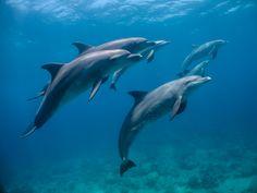 Dolphin House z Marsa Alam