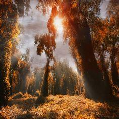 untouched world by ildikoneer, via Flickr
