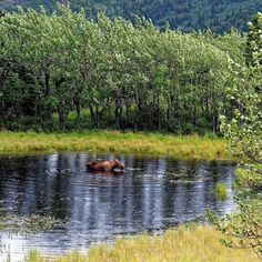 Moose Tub in Kenai