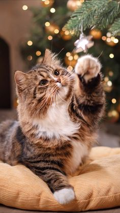 Christmas wallpaper for your iPhone X from Everpix Cute Baby Cats, Cute Little Animals, Cute Cats And Kittens, Cat Background, Christmas Background, Cute Cat Wallpaper, Iphone Wallpaper Cat, Wallpaper Wa, Winter Wallpaper