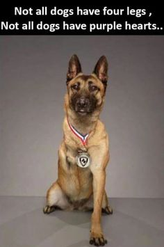 We Salute you Military War K9 Cutie & Hero! May God Bless & Protect you!