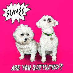 Are You Satisfied? is the debut album of English punk duo Slaves. It was released on 1 June It reached number 8 in. Punk Rock, The Band Album, Mercury Prize, British Punk, Indie, Wall Of Sound, Cd Album, Debut Album, Band Posters