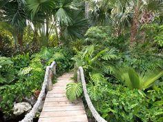 Hier ist ein Garten mit einer Vielzahl von Pflanzen, die wild, ähnlich wie einen Dschungel geworden sind. Mit einem Garten wie diese würden Sie sich fühlen, als ob Sie in der Wildnis verloren gehen.