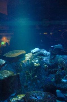 Taking the kids to Vegas?  They'll have fun, here's how...: Shark Reef Aquarium at Mandalay Bay