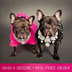 FBRN; you all are angels! Frenchies French Bulldog Dogs In Clothes Dog Clothing #DogsInClothes