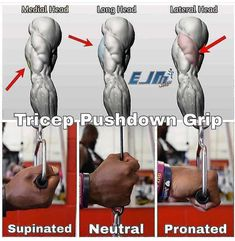 Biceps Workout That Will Have You Bursting Through Your Sleeves! Gym Workout Tips, Weight Training Workouts, Biceps Workout, Fun Workouts, At Home Workouts, Cardio Gym, Gym Training, Workout Fitness, Fitness Motivation