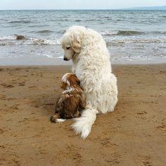 BBF's (best beach friends)