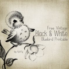 Free Black and White Vintage Bluebird Transfer - I'd make it look more like a baby duck for a tattoo!