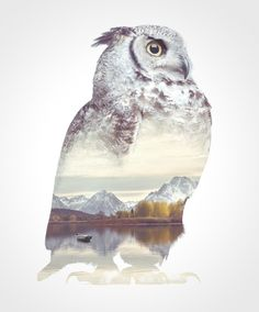 We Take Double-Exposure Animal Portraits To Escape The Daily Routine | Bored Panda