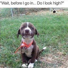 Marijuana Humor                                                                                                                                                                                 More