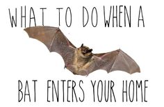 A bat entered my house in the middle of the night...