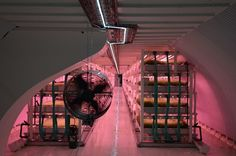 Deep, deep down, beneath the pavements of Clapham, the Growing Underground company nurtures salad leaves and herbs in its vast hydroponic bays. The unorthodox farm makes use of a deep-level shelter from the second world war .The salad farm beneath Clapham