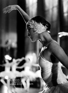 White Swan headpiece