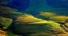 Khám phá Mù Cang Chải, Hoàng Su Phì - thiên đường ruộng bậc thang mùa lúa chín